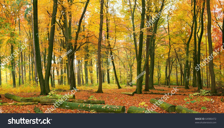 秋天的森林-自然,交通运输-海洛创意(hellorf)-中国-.图片