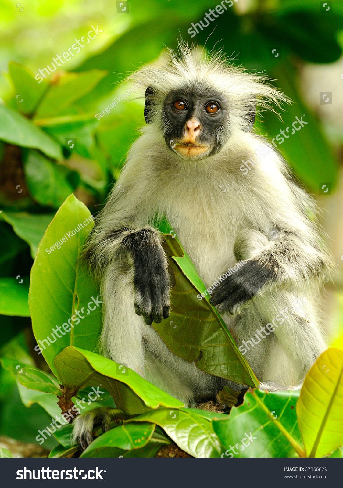 屏保猴子图片大全手机可爱