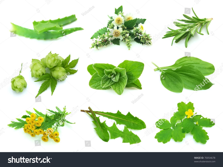 拼贴画各种草本植物在一个白色背景-自然,交通运输-()