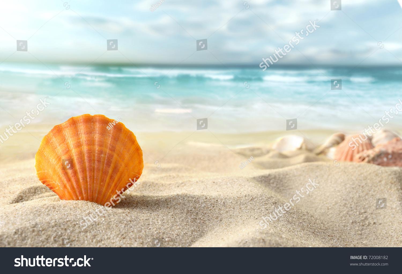 微信头像风景大海贝壳