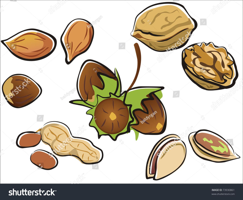 坚果收集卡通风格的孤立的插图-食品及饮料,插图/剪贴