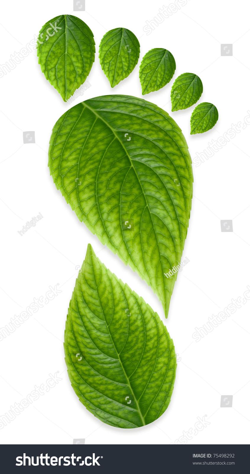 背景 壁纸 绿色 绿叶 蔬菜 树叶 植物 桌面 845_1600 竖版 竖屏 手机