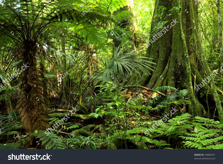 微信头像风景雨林动物