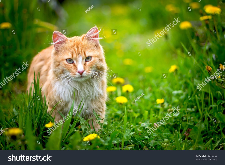 红色希腊只流浪猫户外-公园/户外