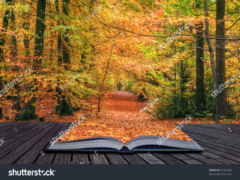 创意概念想法与充满活力的色彩和美丽的秋天秋天森林图片