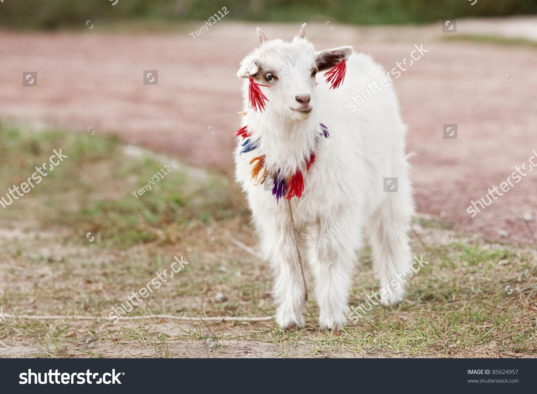 可爱的小山羊好奇谁来了-动物/野生生物