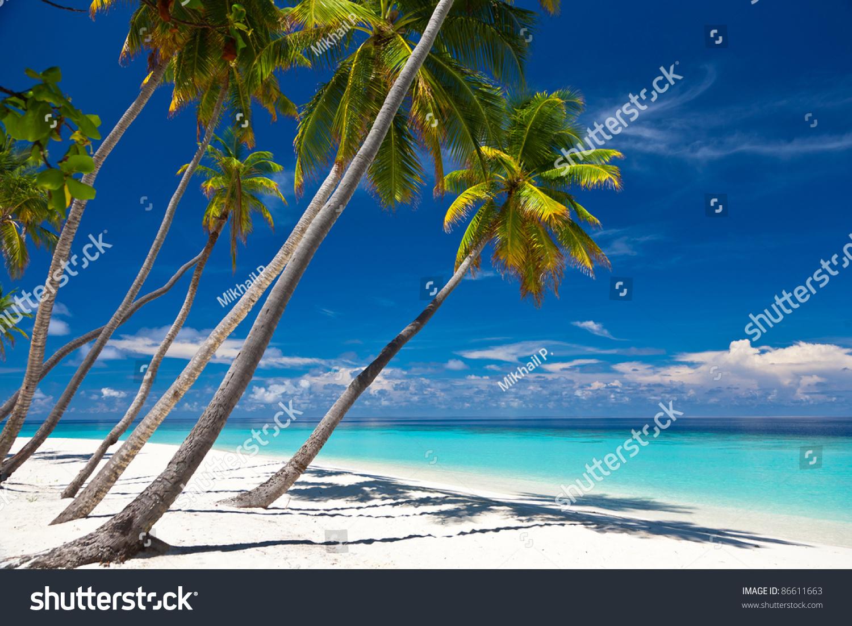 在海滩上椰子树.泻湖.-公园/户外