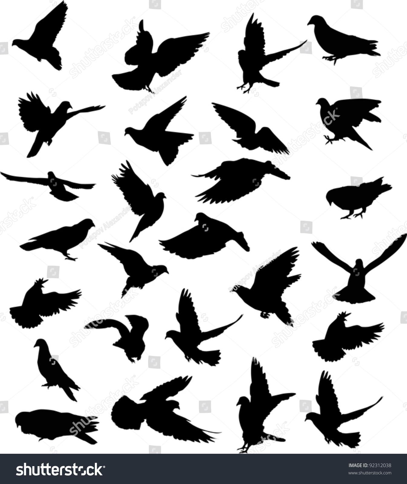 鸽子正面矢量图