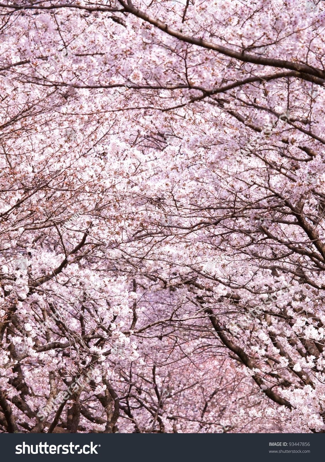 微信聊天背景樱花