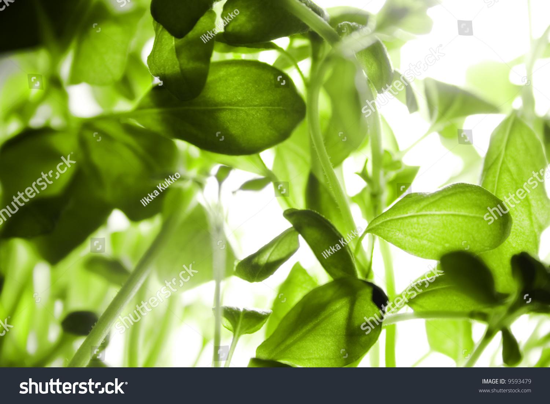 背景 壁纸 花 绿色 绿叶 树叶 植物 桌面 1500_1100